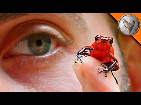 Thumbnail: Poison Frogs in Our Backyard!