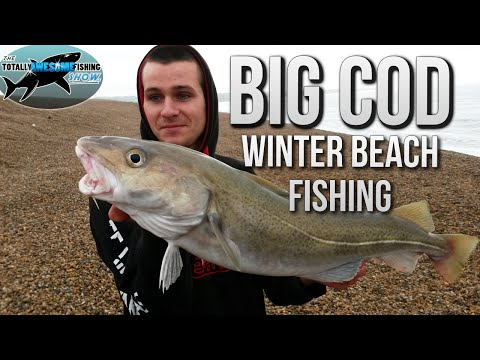 Fishing For Big Cod From The Beach  | TAFishing