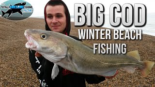 Fishing for Big Cod from the beach  | TAFishing