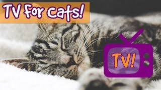 THE BEST TV FOR CATS! Tranquil Bird Videos Combined with Relaxing Music to Soothe and Calm ...