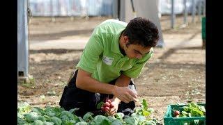 Swiss Skills 2018: Gemüsegärtner/in