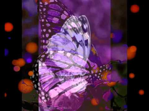 Mariposa (Cada Dia Una Composicion) Sir Flansi
