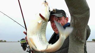 НАШЛИ КРУПНУЮ ВОБЛУ Не успевали закидывать Астраханская вобла 2021 Рыбалка в Астрахани