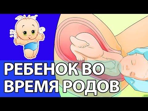 Как ведет себя ребенок во время родов