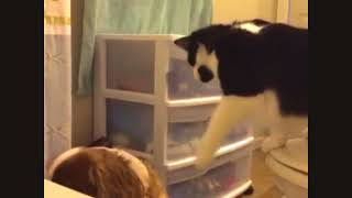 Cats & Dogs Annoying Each Other - Funny Mean Pets Compilation
