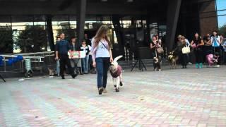 Выставка собак 2013г. Смоленск