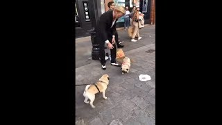 Street Performance Bringing Two Adorable Pugs Together