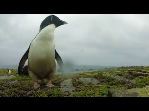 Shifting ecosystems: Falkland Islands