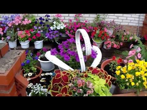 Красивый дворик у дома Украшаем мир цветами!!!