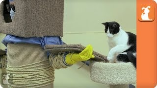 Human Cat Tree - The Human Cat Toy Experiment