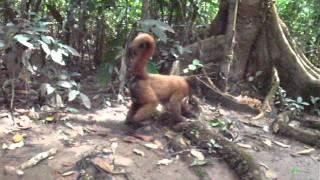 Amazon - Isla de Monos 2