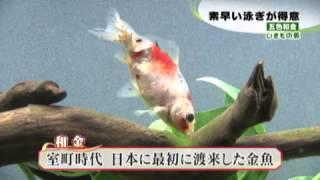 02048-aquarium_thumbnail
