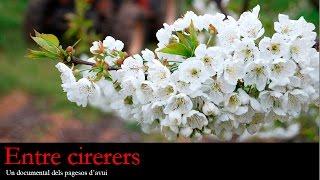 Entre cirerers. Un documental dels pagesos d'avui