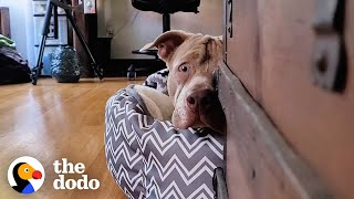 Dog Found By Highway Sprints To His New Family | The Dodo Foster Diaries