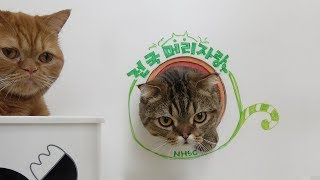Who does have the biggest head? The Big Head Contest for cats! (ENG SUB)