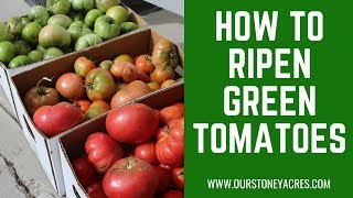 How to Ripen Gręen Tomatoes