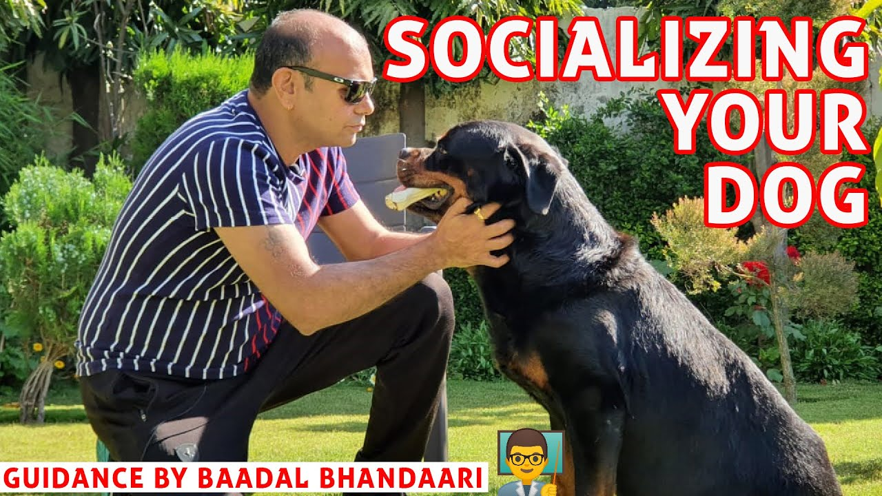 How to Socializing your Puppy or Dog Breed with other Dogs and People (Training by Baadal Bhandaari)