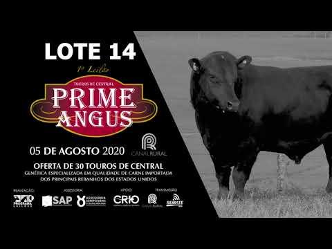 LOTE 14   BLACK OPAL TEI905 PRIME RIB Prod  Agência El Campo