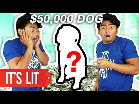 download $1 Vs $50,000 Dog!