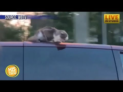 Cat Clings to Roof at 60 Miles Per Hour