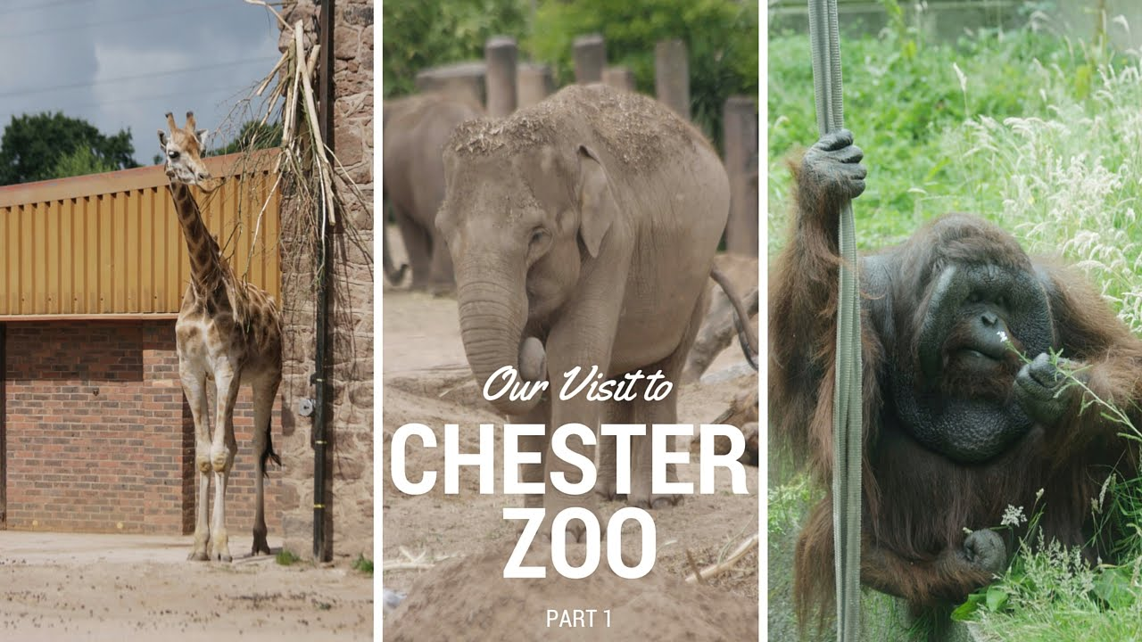 coursework is chester zoo value for money essay [4] leisure, cultural and public utility services: apart from the shopping culture in chester, there are also more social events such as visiting chester zoo, clubs and pubs such as lock keeper bar and number fifteen, with the highest rating on chesternightscom, (2012.
