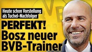 Ajax Bosz neuer DortmundTrainer  MMAFighter  Carmen Geiss  Aktuelle Nachrichten 6617