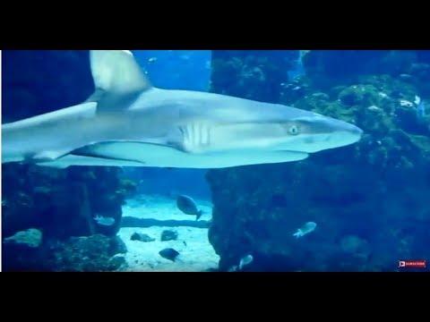 Monaco Oceanographic Museum | Monaco Travel