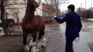 Лошади драка