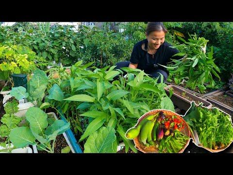 Download Hái dưa leo,cà chua,đậu que,đậu rồng,mướp,chùm ngây,rau muống,cà tím,cần tây,ớt,hành baro,sung #1041
