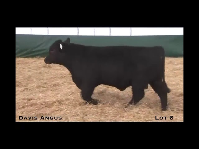 Davis Angus Lot 6