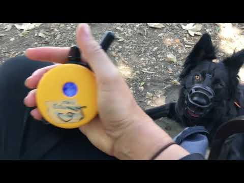 Rehabbing aggressive and nervous dogs with ecollar training, dog training