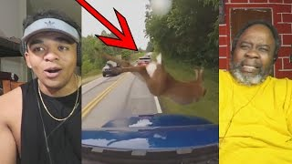 Baixar Dad Reacts to Deer vs Cars || Ultimate Dash Cam Fails Compilation
