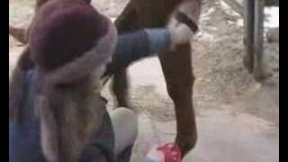 Чистка лошади - 2 - плечо, нога