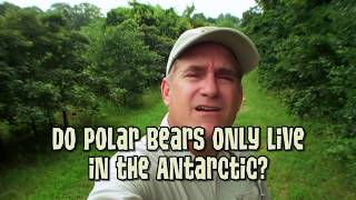 Animal Jam - Ask Brady: Do polar bears only live in the Antarctic?