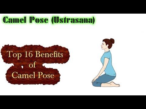 Camel Pose Yoga (Ustrasana) Top 16 Benefits of This Pose