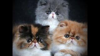 Кошки – милые созданья