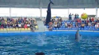 ❤ Шоу дельфинов в дельфинарии
