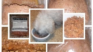 Maltese Dog Trying Out Freshly Cooked Allprovide Dog Food
