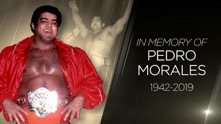 وفاة أسطورة المصارعة بيدرو موراليس - في الحلبة