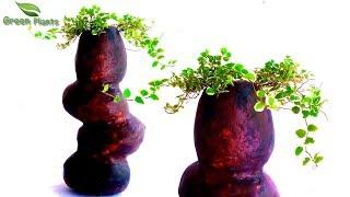 Rock Shaped Cement Planter-Unique Cement Tree Pot-Cement Planter at Home-Planter Ideas//GREEN PLANTS