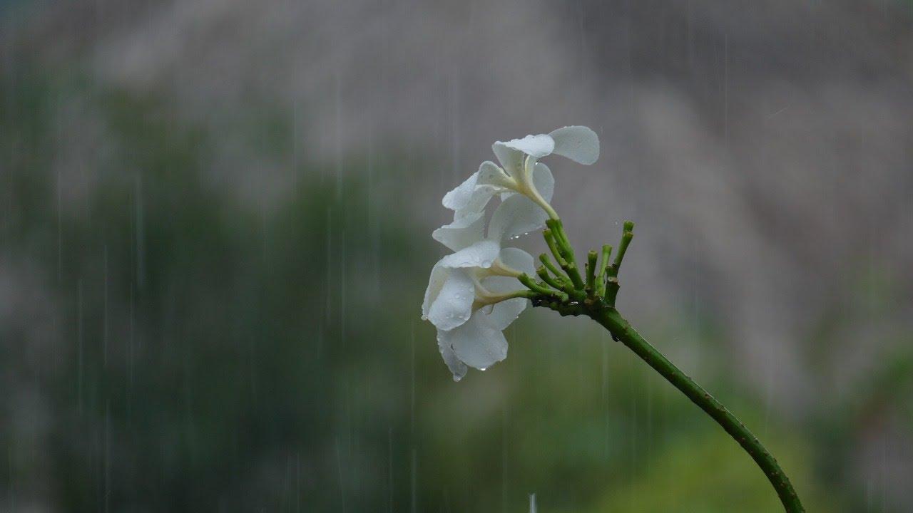 Musica para Dormir bien con sonido de lluvia y trueno