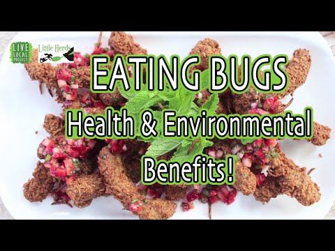 EATING BUGS! Edible Insects with Little Herds, Austin Nonprofit