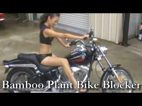 Bamboo plant privacy screen rapper burglar fence block