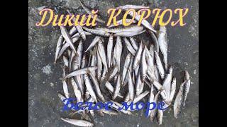 Зимняя морская рыбалка Ловля корюшки