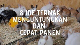 8 Ternak yang Menguntungkan dan Cepat Panen Untuk Usaha Kecil Ada banyak Jenis ternak yang menguntungkan memang sangat menggiurkan bila ...