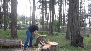 Black Powder Stump Split
