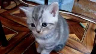 два смешных котенка играют ( Во что ИГРАЮТ КОТЯТА ? )
