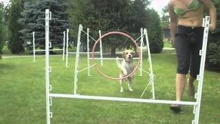 Fado Beagle-agility.mpg