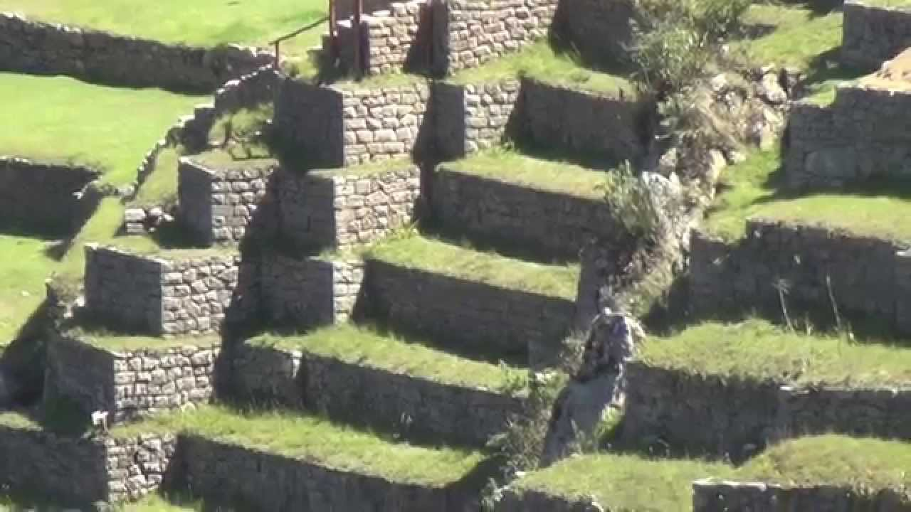 Impresionantes Terrazas En Machupicchu Perú By Amapacoan Gaia
