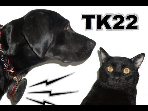 Talking Kitty Cat 22- Dogs Can't Talk